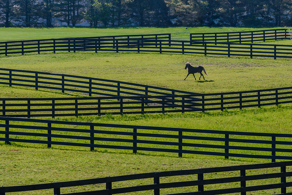 Horse, Two Trees Farm, Bridgehampton, NY