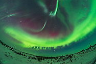 An all-sky aurora display in the early morning hours (between 3 and 4 am) on February 10, 2018, shot from the upper deck of the Churchill Northern Studies Centre, Churchill, Manitoba. The main arc had an ususual feathered lower edge with protruding patches. Visually, the aurora was dim and colourless. Kp Index was 1. This is looking east with Jupiter rising at centre. <br /> <br /> This is a single exposure with the 12mm Rokinon full-frame fish-eye lens on the Nikon D750.