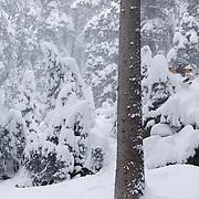 Freeride, Arlberg, Vorarlberg, Winter, Sascha Geist, Sonnenkopf
