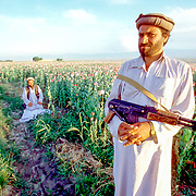 Standing guard while another attends to evening prayers, Pashtun farmers on the border with Pakistan, keep a close watch over their crop of opium poppies.