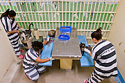 18 JULY 2005 - PHOENIX, AZ, USA: Women inmates in the Maricopa County Jail, play with cats at the Maricopa Animal Safe Hospice (MASH) an animal shelter created by Maricopa County Sheriff Joe Arpaio. Arpaio created the no kill shelter in 2000 and staffs it with women inmates from the county jail system. Most of the 60 dogs and 32 cats in the shelter were rescued from abusive homes. The animals are available for adoption to homes in Maricopa County. The shelter is housed in an old jail next to the county courthouse. Working in the shelter is considered a plum assignment by inmates and there is a waiting list to be assigned to the shelter. In 2011, the US Department of Justice issued a report highly critical of the Maricopa County Sheriff's Department and the jails. The DOJ said the Sheriff's Dept. engages in widespread discrimination against Latinos during traffic stops and immigration enforcement, violates the rights of Spanish speaking prisoners in the jails and retaliates against the Sheriff's political opponents.      PHOTO BY JACK KURTZ
