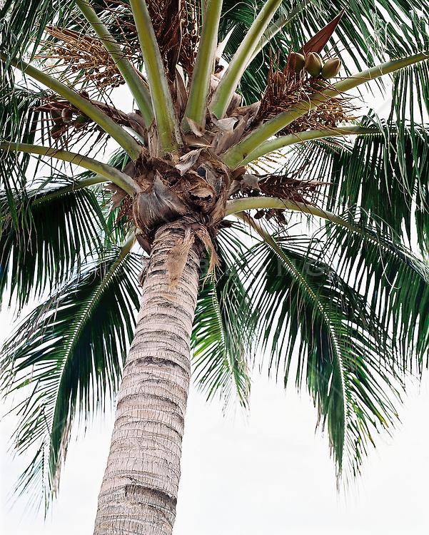 Palm tree, low angle view