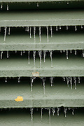 Ice formed overnight during a cold snap in San Antonio. TX on Jan 16, 2007.