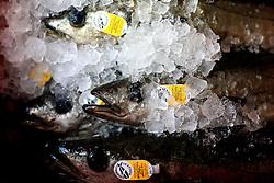 UK CORNWALL NEWLYN 10JUN08 - Pollack in iced boxes in the Newlyn Fish Market shortly after landing at Newlyn harbour in Cornwall, western England...jre/Photo by Jiri Rezac / WWF UK..© Jiri Rezac 2008..Contact: +44 (0) 7050 110 417.Mobile:  +44 (0) 7801 337 683.Office:  +44 (0) 20 8968 9635..Email:   jiri@jirirezac.com.Web:    www.jirirezac.com..© All images Jiri Rezac 2008 - All rights reserved.