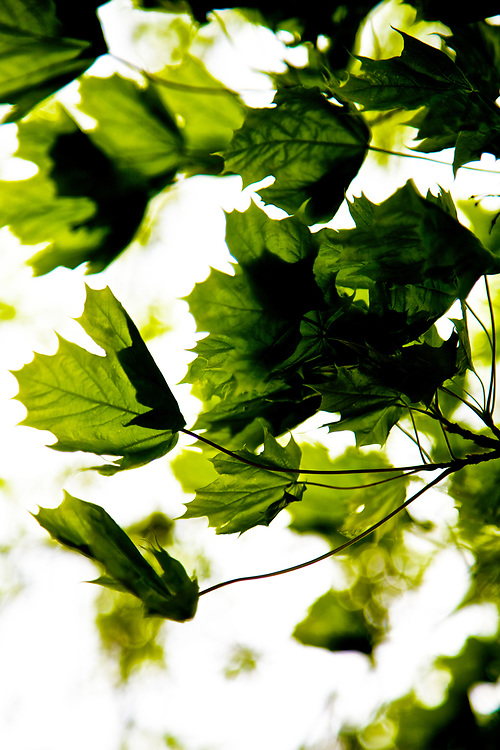 Windy Green<br />