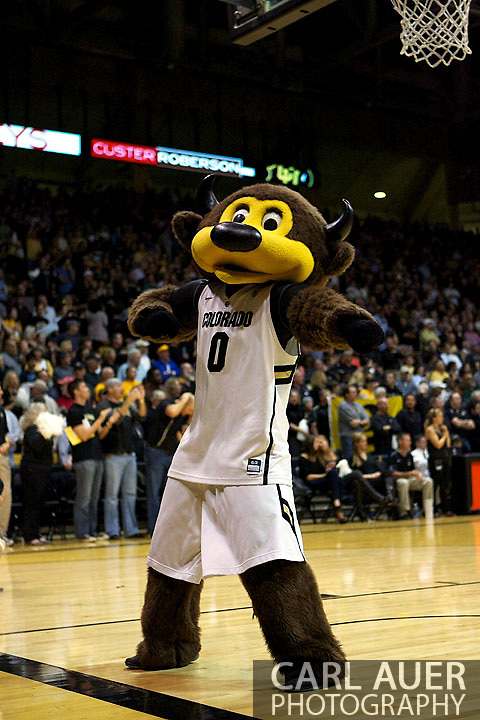 December 5, 2012: Chip the Colorado mascot pumps the crowd up prior to the start of action in the NCAA Basketball game between the Colorado State Rams and the Colorado Buffaloes at the Coors Event Center in Boulder Colorado