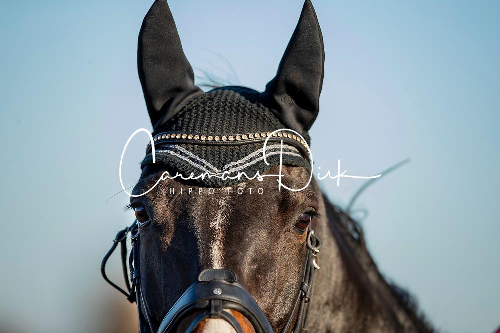 De Keersmaecker Jolien, BEL, Morumbi CD<br /> Eventing Sint Gillis Waas 2019<br /> © Hippo Foto - Dirk Caremans<br /> 10/11/2019