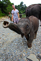 Baby elephant in Tangkahan.
