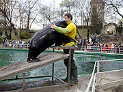Seal Show at the Zoo of Budapest, Hungary