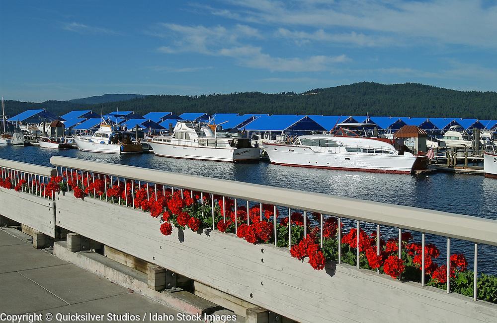 Idaho, Coeur dAlene, Resort Marina, Wooden Boat Fest.