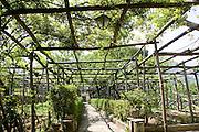 Traditional grapevine bower, Ravello, Campania, Italy the village center
