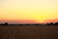 A flock of crows flies over a dry autumn corn field near Sacramento, California.