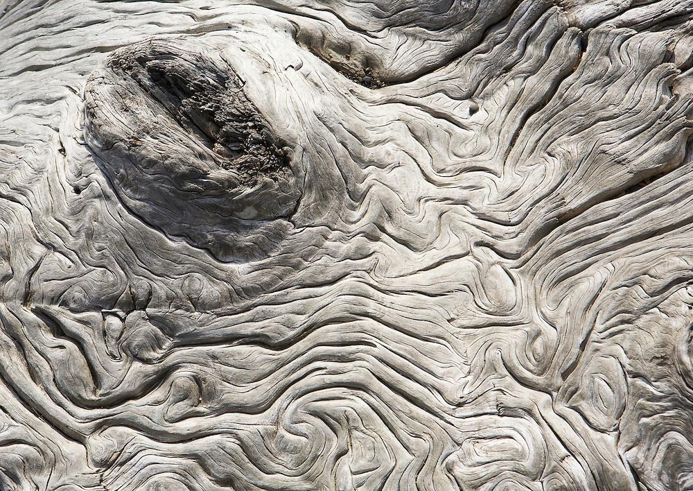 Close-up of drift wood on Rialto Beach, Washington Coast.