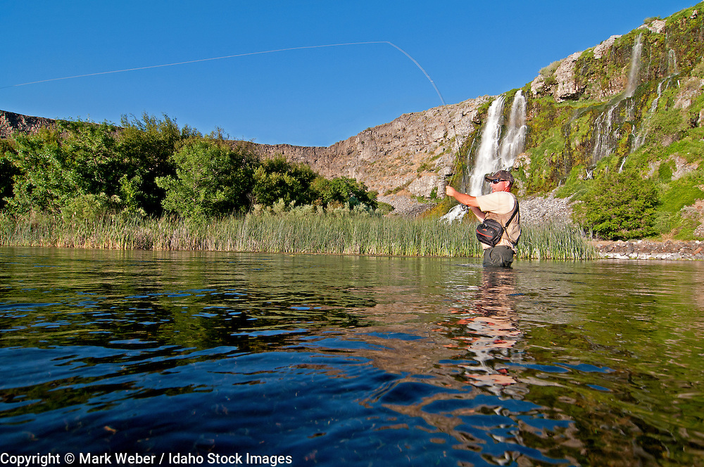 Andy Preiksa fly fishing at 1000 Springs on The Snake River near the city of Hagerman in southern Idaho