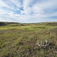 deer skull on prairie