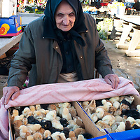 TIMISOARA, ROMANIA - APRIL 21:  A farmer sells young chicks from his stall at the daily market on April 21, 2013 in Timisoara, Romania.  Romania has abandoned a target deadline of 2015 to switch to the single European currency and will now submit to the European Commission a programme on progress towards the adoption of the Euro, which for the first time will not have a target date. (Photo by Marco Secchi/Getty Images)