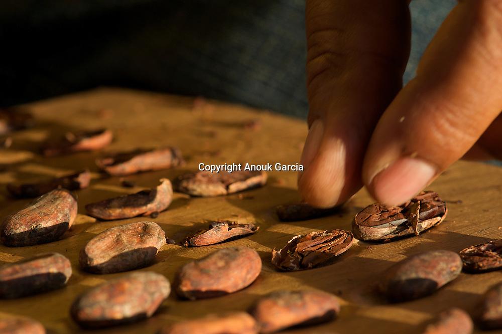 Apre?s se?chage, les fe?ves sont ouvertes et goute?es pour e?valuer la qualite? de la re?colte///After drying, the broad beans are opened and tasted to evaluate the quality of harvest.