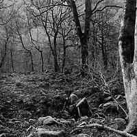 Woodland scene in England