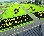 """Rice field Art or Tambo Art.<br /> In northern Japan the small village of Inakadate plants five different varieties of rice all different colours to produce.   """"Rice field art""""<br /> <br />  This is an annual event and attracts many thousands of tourists. Every year in autumn they have a different subject matter to be viewed. <br /> <br />  The design is done by an artist and then in a computer the design is calculated and adjusted to what it would look like when it is viewed from the town hall watch tower. Then the design is marked out in the rice fields.<br /> <br />  On the planting day people from all over Japan, some exchange students from many countries and the local people spend about 2 hours planting the rice."""