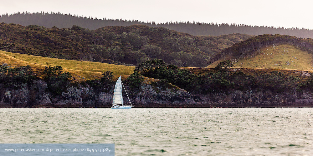 Great Mercury Island.  Yacht sailing past the islands southern coast. Cliff, farmland, native bush and pine forest in the background.