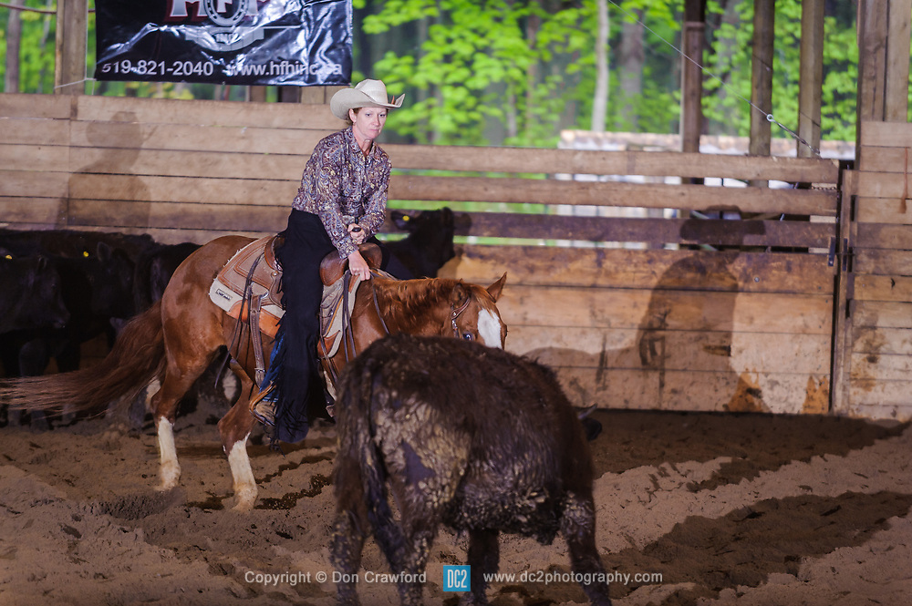 May 21, 2017 - Minshall Farm Cutting 4, held at Minshall Farms, Hillsburgh Ontario. The event was put on by the Ontario Cutting Horse Association. Riding in the 2,000 Limited Rider Class is Lisa Hall on Quixote Lena Pepto owned by the rider.