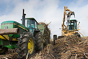 14 NOVEMBER 2005 - FRANKLIN, LA: A loader puts freshly cut sugar cane into a wagon on Jesse Breaux' farm for hauling to the St. Mary Sugar Co-Op Mill near Franklin, Louisiana during the 2005 sugar cane harvest. Louisiana is one of the leading sugar cane producing states in the US and the economy in southern Louisiana, especially St. Mary and Iberia Parishes, is built around the cultivation of sugar. Sugar growers in the area are concerned that trade officials will eliminate sugar price supports during upcoming trade talks for the proposed Free Trade Area of the Americas (FTAA). They say elimination of price supports will devastate sugar growers in the US and the local economies of sugar growing areas. They also say it will ultimately lead to higher sugar prices for US consumers. PHOTO BY JACK KURTZ