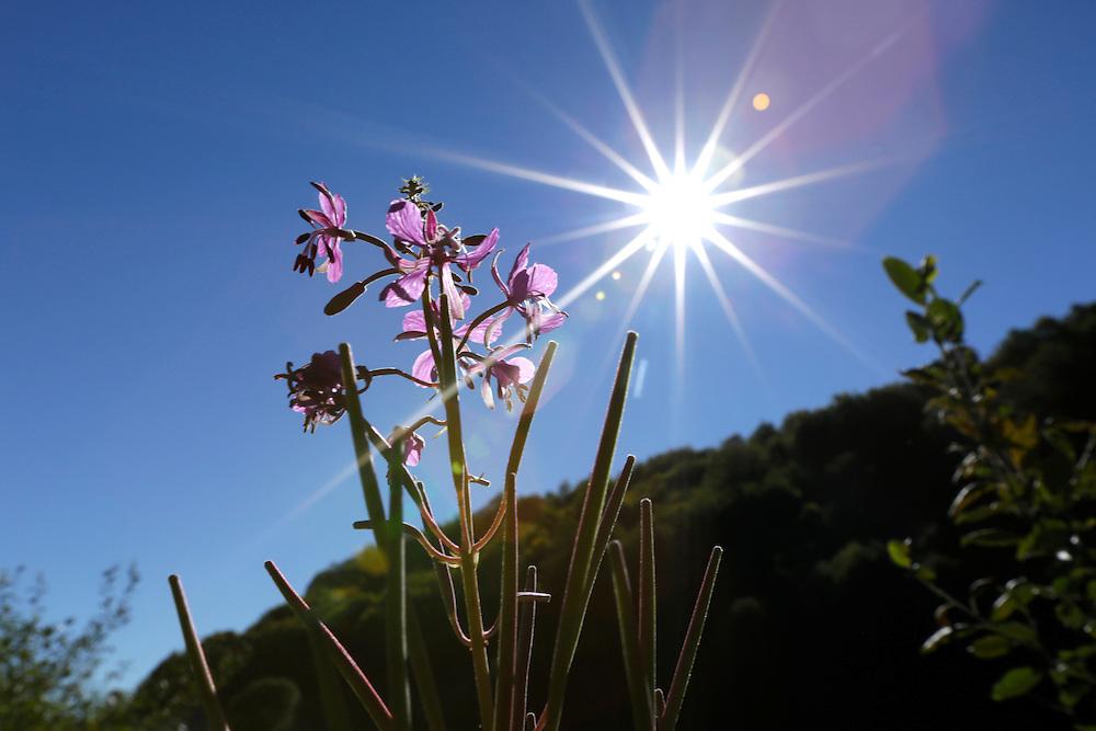 Sun and flowers on Zelengora mountain, Sutjeska National Park, Bosnia and Herzegovina.