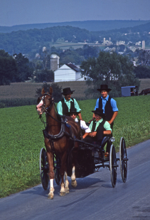 Amish male youth ride in open horse and buggy, Lancaster Co., PA