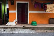 Primitief huisje, India