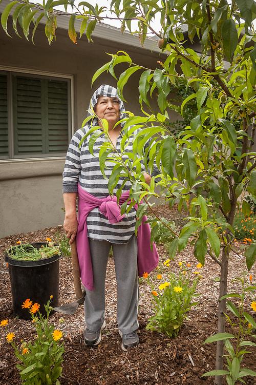 Middleton resident and professional gardener, Juana Garcia, gardens a property on Cedar Street in Calistoga.