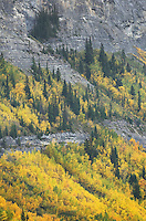 Fall color Banff National Park