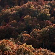 October 25, 2009 - Slade, Kentucky, USA - Trees in the Natural Bridge State Park show their colors during what was expected to be the peak weekend for fall color in the area. (Credit image: © David Stephenson)