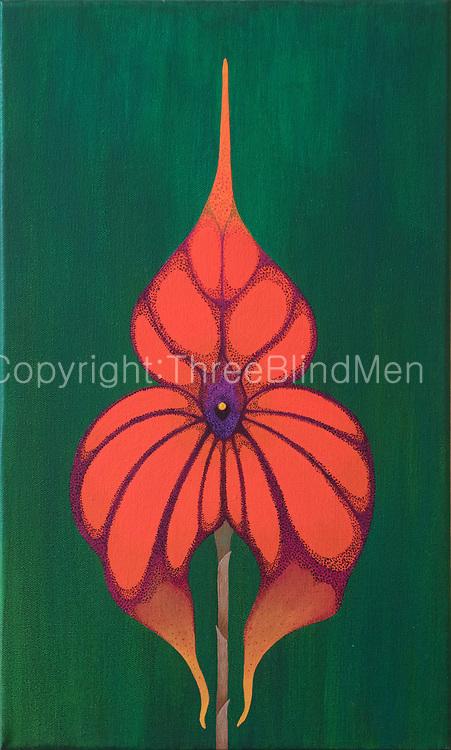 Mike Harridge. Masdevellia Veitchiana.<br /> 19.5  x  11.5&quot;<br /> Acrylic on Canvas.<br /> 20,000/-