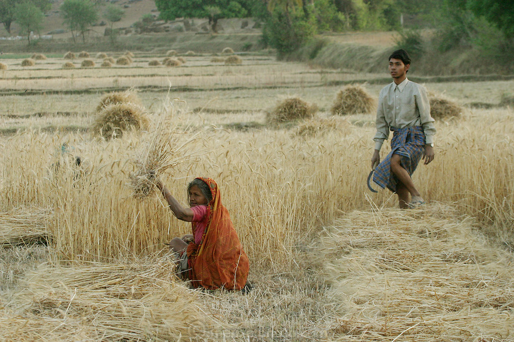IND.MWdrv04.009.x..Ahraura Villagers harvest wheat, Uttar Pradesh, India. {{Ahraura is the home village of the Yadavs?India's participants in Material World: A Global Family Portrait, 1994 (pages: 64-65), for which they took all of their possessions out of their house for a family-and-possessions-portrait.}}.