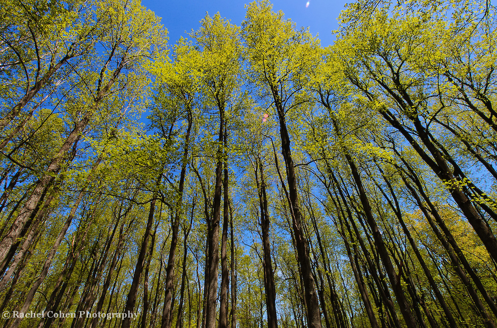 &quot;Height of Spring&quot;<br />