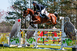 March 22, 2019 - Raeford, North Carolina, US - March 22, 2019 - Raeford, N.C., USA - CLAYTON FREDERICKS of Australia riding FE OPHELIA competes in the show jumping CCI-4S division at the sixth annual Cloud 11-Gavilan North LLC Carolina International CCI and Horse Trial, at Carolina Horse Park. The Carolina International CCI and Horse Trial is one of North AmericaÃ•s premier eventing competitions for national and international eventing combinations, hosting International competition at the CCI2*-S through CCI4*-S levels and National levels of Training through Advanced. (Credit Image: © Timothy L. Hale/ZUMA Wire)