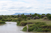 Kenya, Masai Mara, Elephants and giraffes at a water hole