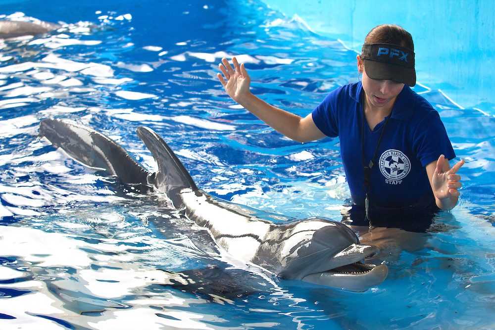 Abby Stone trains Winter the dolphin at Clearwater Marine Aquarium. At only three months of age, Winter found herself wrapped tightly in a crab trap line and was unable to escape. She was rescued from Mosquito Lagoon (near Cape Canaveral) and transported to Clearwater Marine Aquarium in Clearwater, Florida to begin a long rehabilitation. Unfortunately, Winter lost her entire tail as well as two vertebrae a result of the serious injuries that she had sustained.Although her story is intriguing, it is also very rare, as many dolphins unfortunately die in monofilament and crab trap lines. Despite the odds against survival, Winter's energy and ability to adapt to her new physical form has surpassed the expectations of many experts. Winter has done amazingly well in the short time since her stranding. She has completely healed, adapted to a new swim pattern, and learned to eat fish on her own. -Clearwater Marine Aquarium