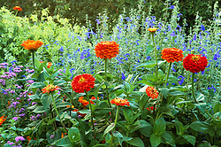 Zinnia 'Cactus Orange' with Salvia patens, Nicotiana alata 'Lime Green' and Ageratum 'Florist's Blue'