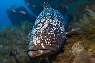 Marine Life by Species