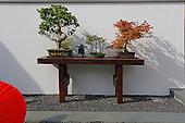 Asian Garden 1063