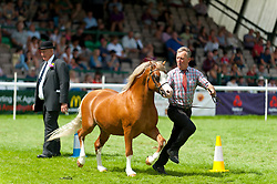 © Licensed to London News Pictures. 25/07/2017. Llanelwedd, Powys, Wales, UK. Welsh Cob horses are judged in the Main Ring on the second day of the Royal Welsh Show. The Royal Welsh Agricultural Show is hailed as the largest & most prestigious event of its kind in Europe. In excess of 200,000 visitors are expected this week over the four day show period. The first ever show was at Aberystwyth in 1904 and attracted 442 livestock entries. Photo credit: Graham M. Lawrence/LNP