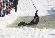 Warwick, NY - A skier raises his arms after falling while trying to cross the water at the end of a run during the Spring Rally at Mount Peter in Warwick on March 29, 2008.