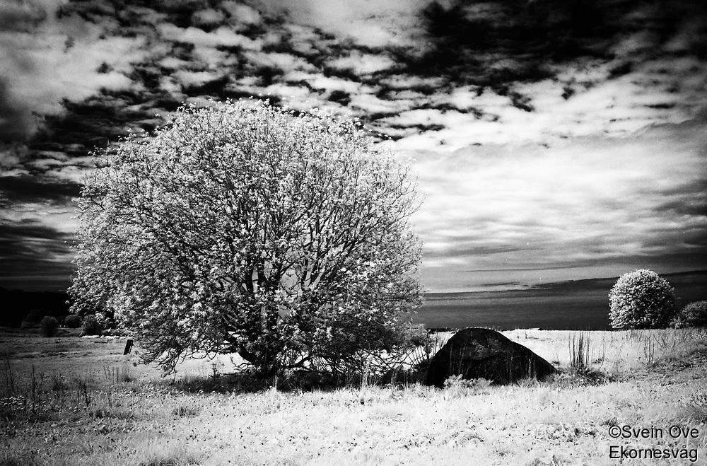 Summer breeze.<br /> Foto: Svein Ove Ekornesvåg