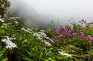 Colorful flowers in the misty forest of Madeira