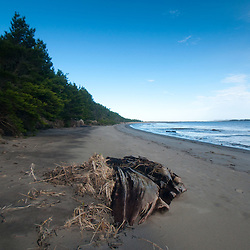 Beach at Leadbetter Point State Park, Long Beach, Washington, US