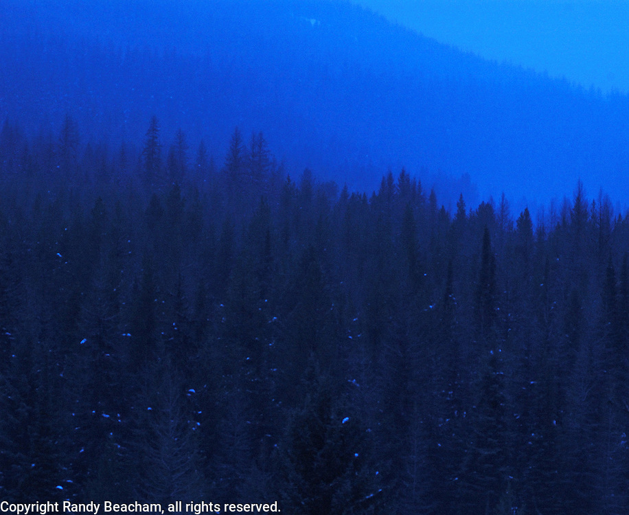 Winter storm on Lick Mountain at twilight. Yaak Valley in the Purcell Mountain, northwest Montana.