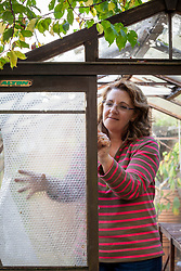 Preparing a greenhouse for winter - putting up plastic bubble wrap insulation