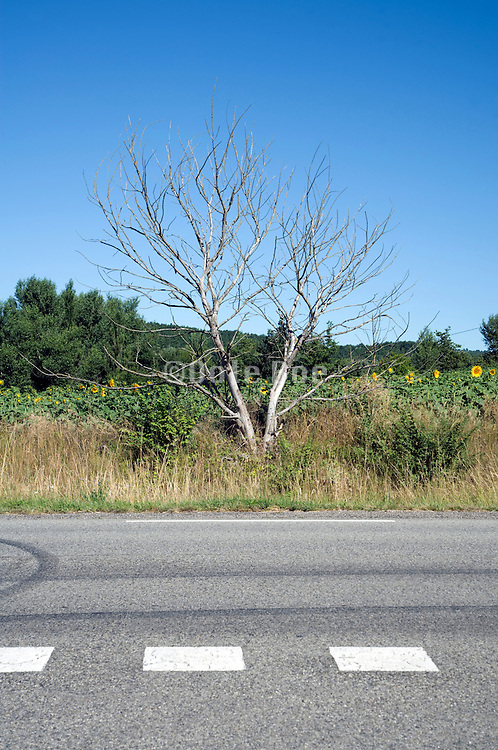 dead tree beside the road
