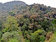 The rainforest of Biwindi Impenetrable National Park, Uganda.